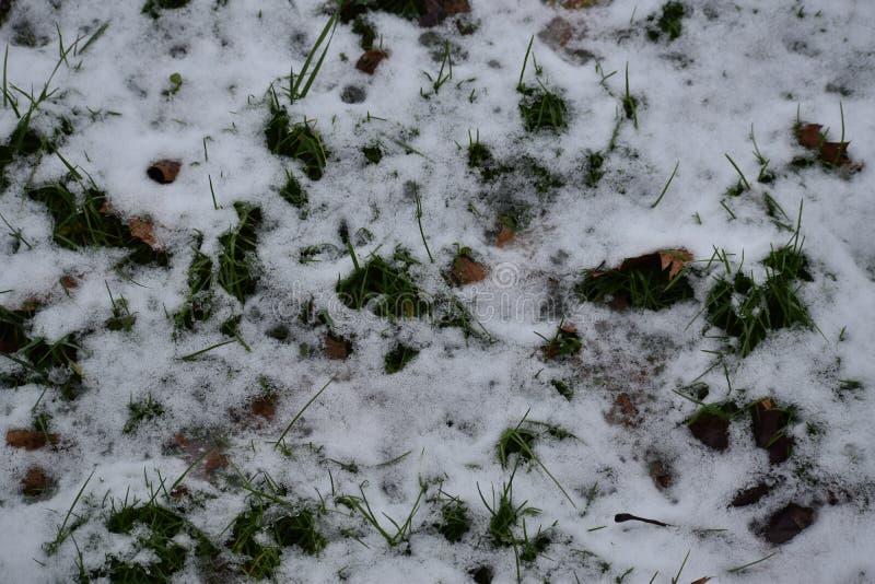 Västra Virginia Snow på gräskullar royaltyfri bild