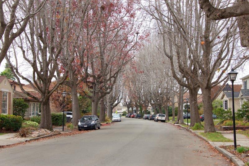Vätskebärnstensfärgade träd i den förorts- grannskapen som är karg av sidor i vinter arkivbild