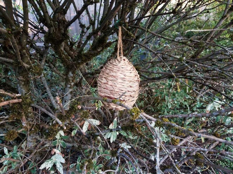Vävt korgfågelrede i trädfilialer royaltyfria bilder