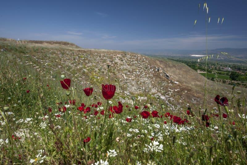 Växa för blommor på Laodikeia i Turkiet arkivbilder