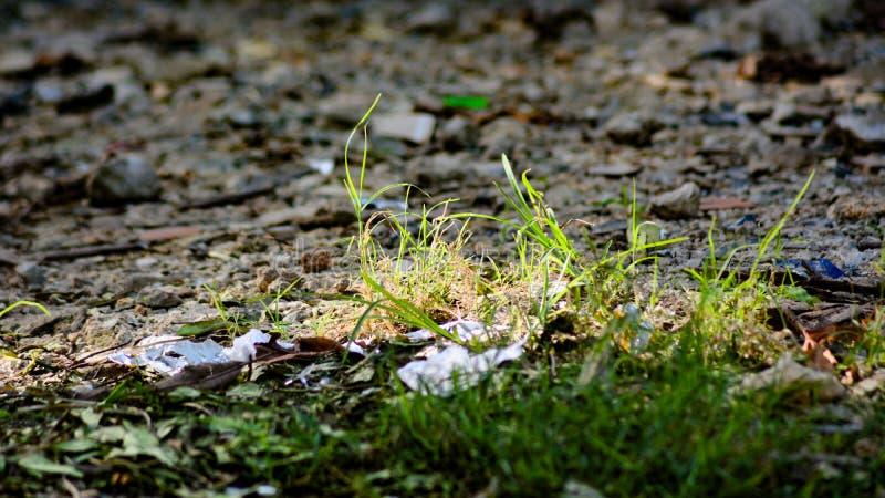 Växa för gräs fotografering för bildbyråer