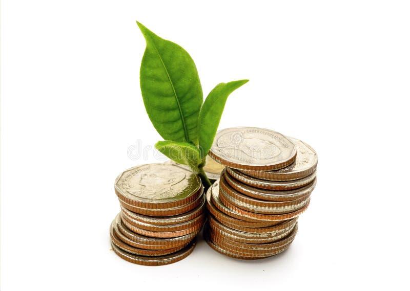 Växa från mynt arkivbild