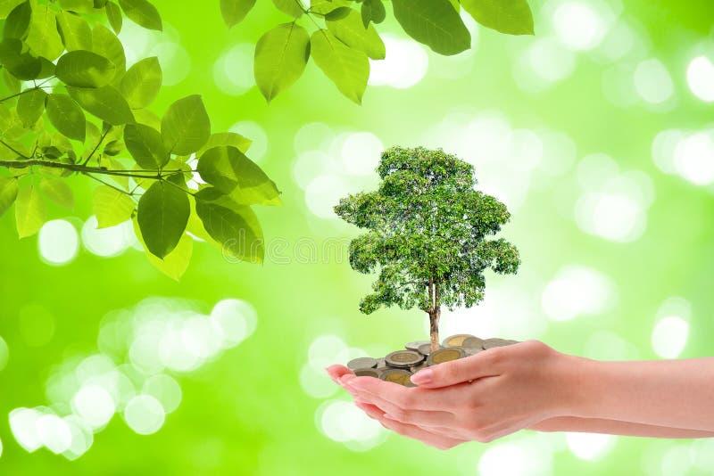 Växande begrepp för affär: Växtträd som igenom växer från högen av mynt i kvinnahand med grönt naturligt i bakgrund arkivfoton