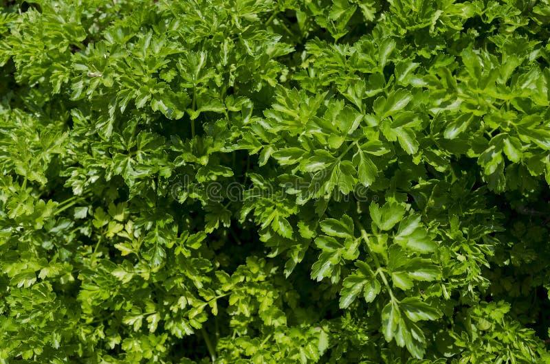 Växande bio örter och grönsaker arkivbilder