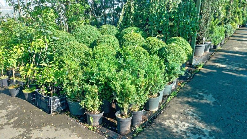 Växande blommor och gröna växter i ett växthus Produktion och odling av blommor Barn som planterar i ett växthus royaltyfria foton