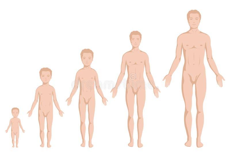 Växande etapper för kropp, människokropp stock illustrationer