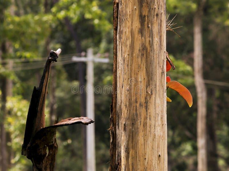 Växande färgrika sidor på torkat träd arkivfoton