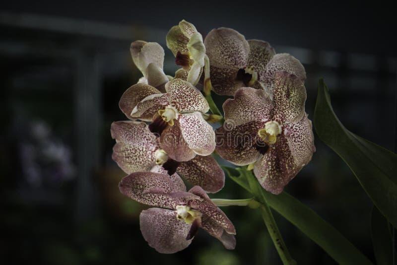 Växande härlig purpurfärgad blomma på veranda arkivbild