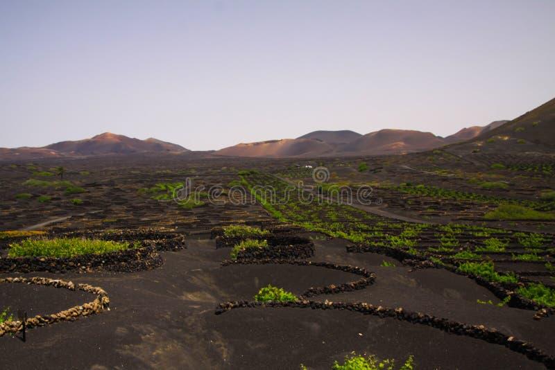 Växande område för vin på torr jordning för vulkanisk aska nära Uga, Lanzarote royaltyfri fotografi