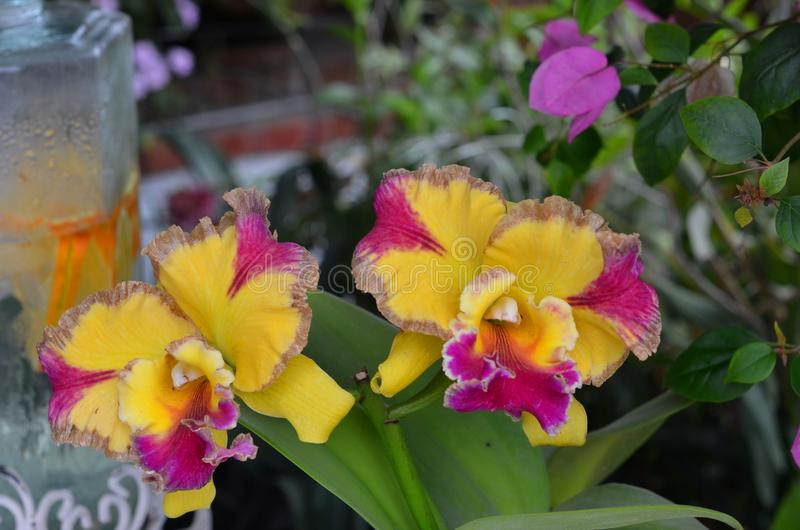 Växande orkidér arkivfoton