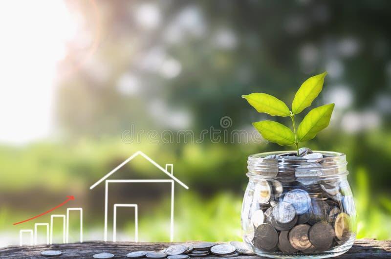 Växande pengar och växt, sparande pengarbegrepp, begrepp av finansiella besparingar som köper ett hus royaltyfri fotografi