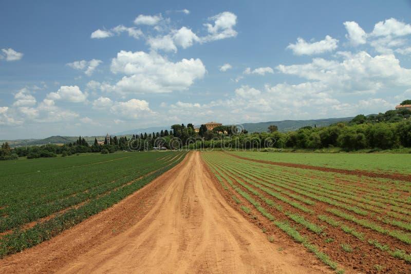 växande tuscany arkivbilder