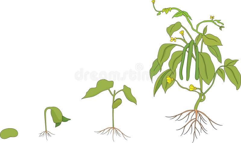 växande växt royaltyfri illustrationer