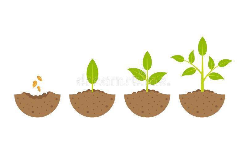 Växande växt i process På vitbakgrund vektor illustrationer
