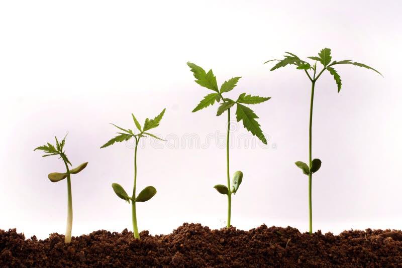 växande växter arkivfoto