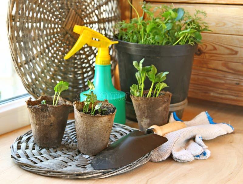 växande växter för balkong royaltyfria foton