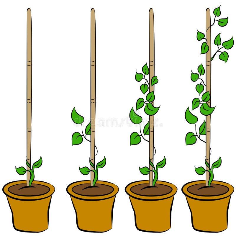 växande växtetapper vektor illustrationer