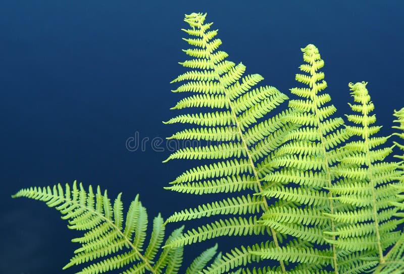 Download Växt fotografering för bildbyråer. Bild av flod, växter - 282631