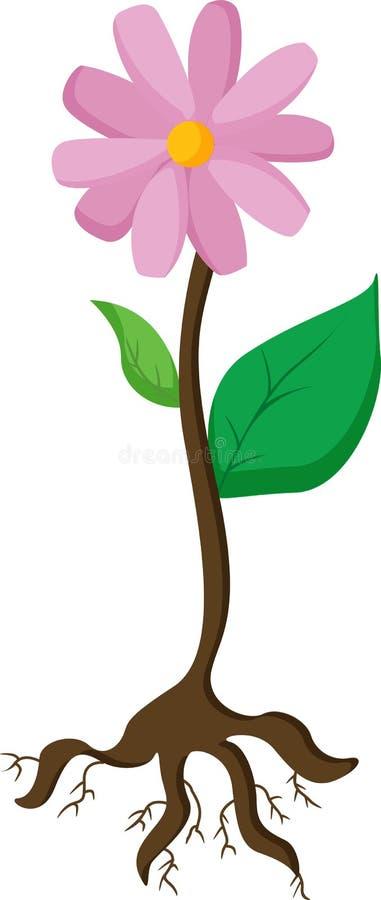 växt vektor illustrationer