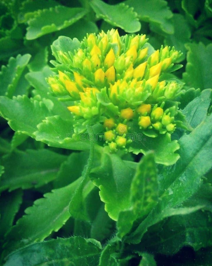 växt arkivbild