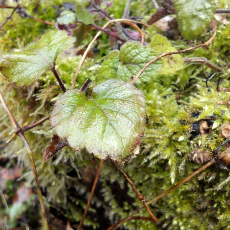 växt- arkivfoto