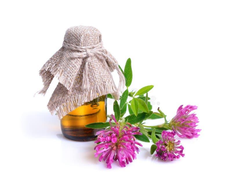 Växt av släktet Trifolium eller trefoil är gemensamma namn för växter av släktet Trifo fotografering för bildbyråer