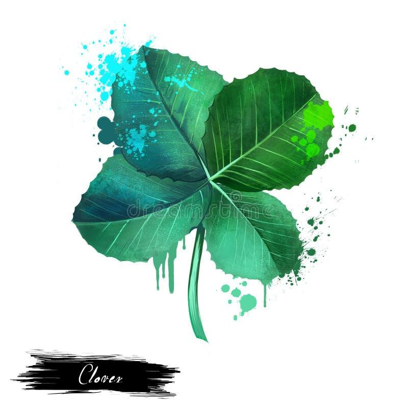 Växt av släktet Trifolium- eller trefoilvattenfärg Släkte Trifolium stock illustrationer
