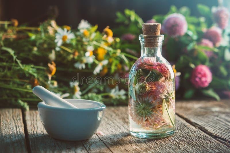 Växt av släktet Trifoliumtinktur- eller avkok-, mortel-, tusensköna- och växt av släktet Trifoliumblommor samlar ihop arkivfoton