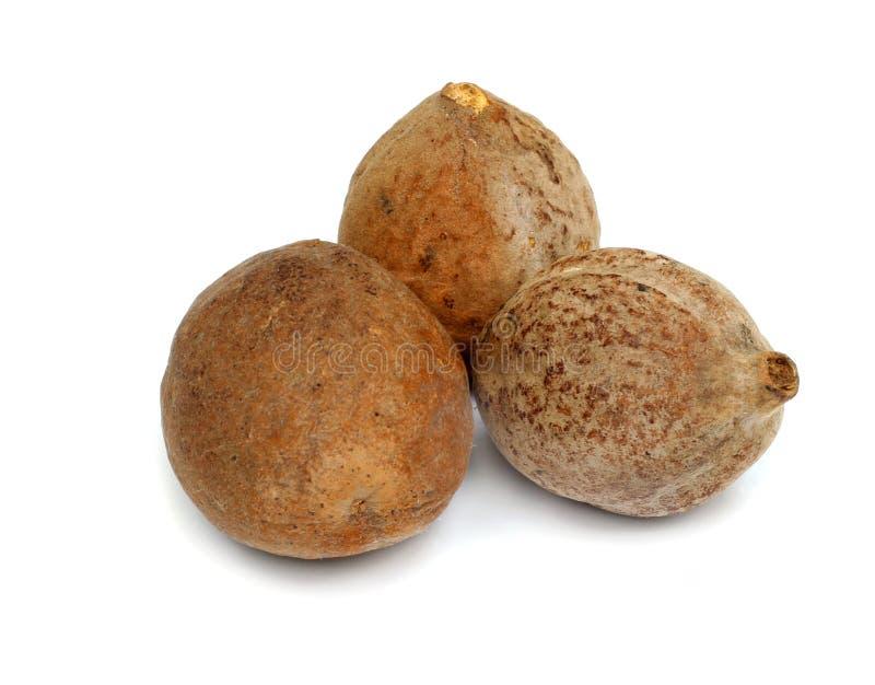 Växt- Bahera frukt royaltyfri bild