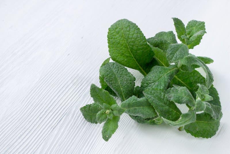 Växt- blandning för ny mintkaramell och för Melissa på vit träbakgrund royaltyfri bild