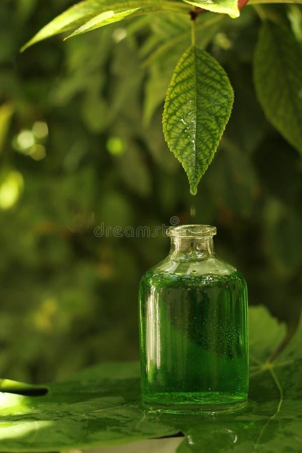 Växt- extrakt arkivbilder