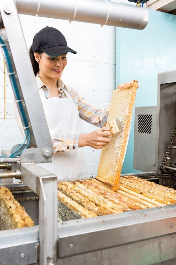 Växt för BeekeeperBrushing Honeycomb At extraktion royaltyfria bilder