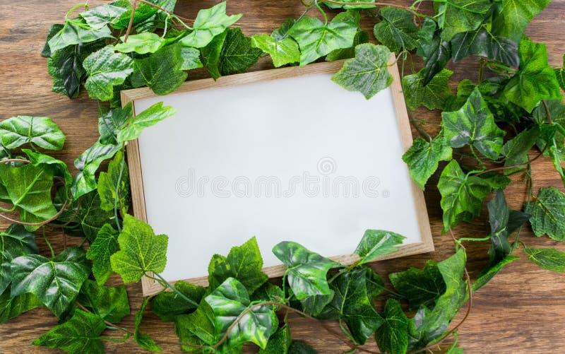 Växt för fyrkant för ramaffischåtlöje grön royaltyfri foto