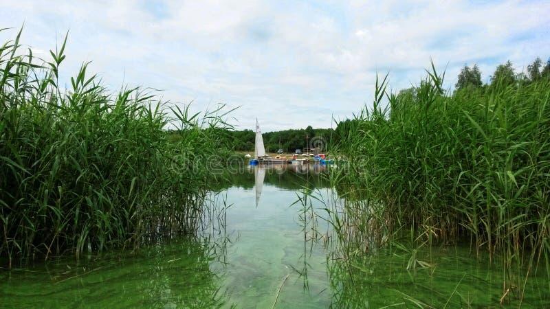 Växt För Grönt Gräs På Kropp Av Vatten Under Dag Gratis Allmän Egendom Cc0 Bild