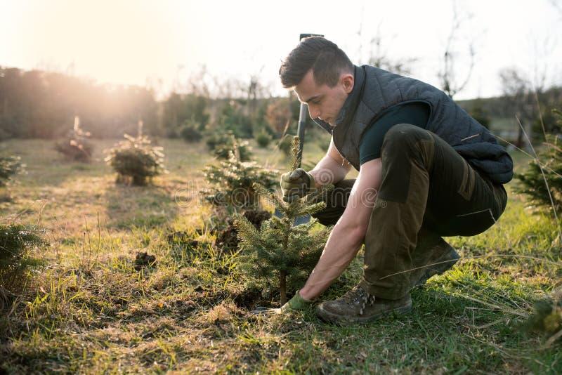 Växt för ung man ett litet träd i trädgården r r Gran royaltyfri bild
