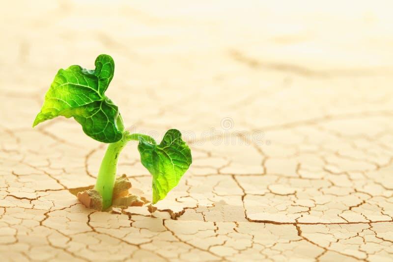 Växt i öknen royaltyfri bild
