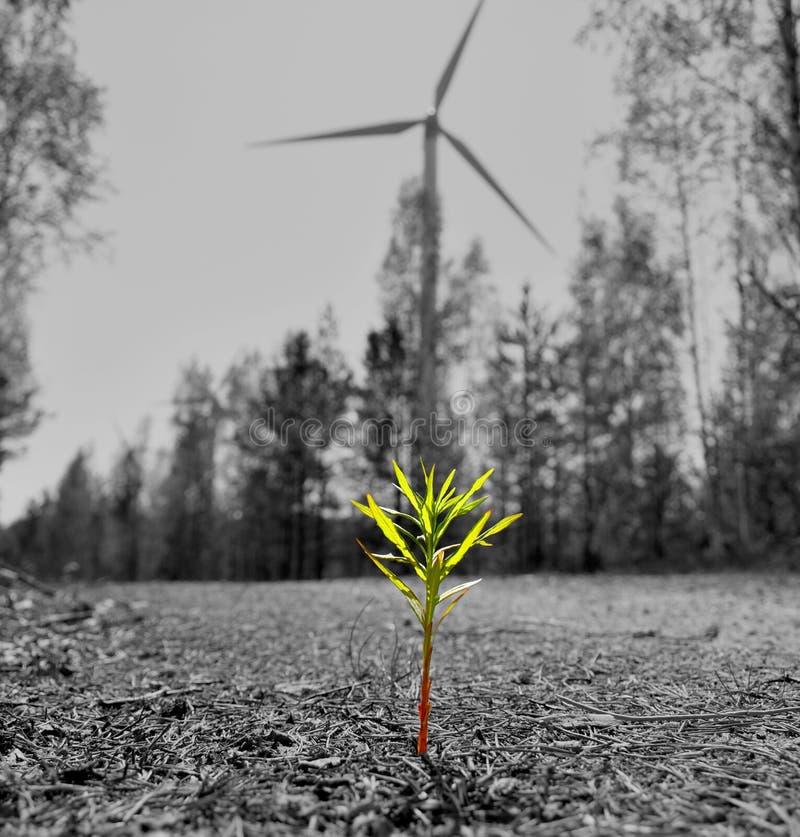 Växt i en väderkvarnbakgrund arkivfoto