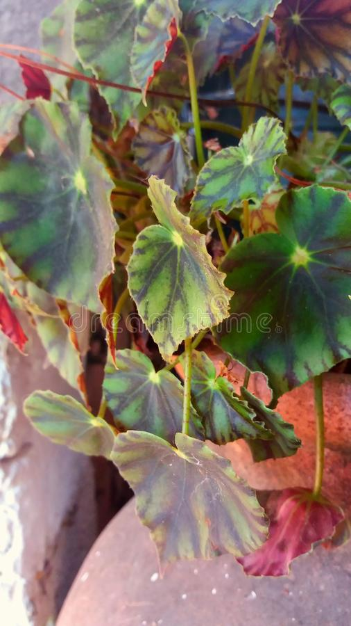 Växt i krus fotografering för bildbyråer