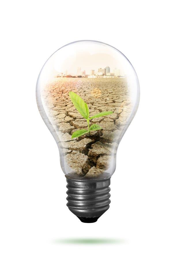 Växt i lightbulb fotografering för bildbyråer