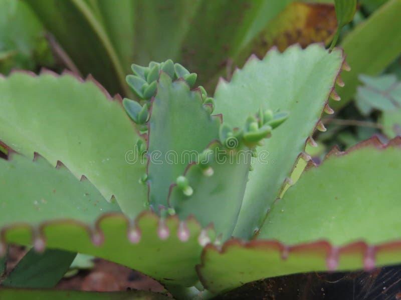 Växt i natur arkivfoton