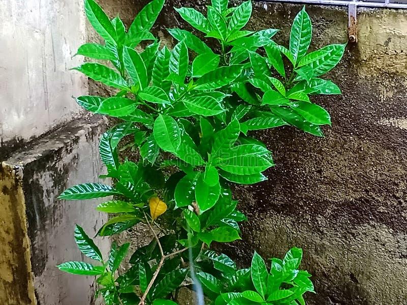växt i regn arkivfoton