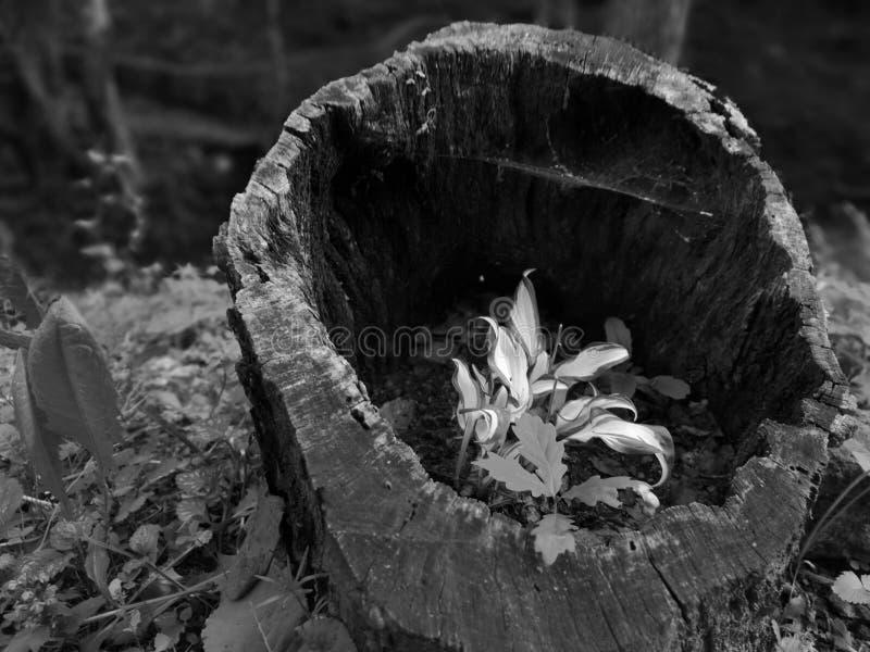 Växt i tre arkivbild