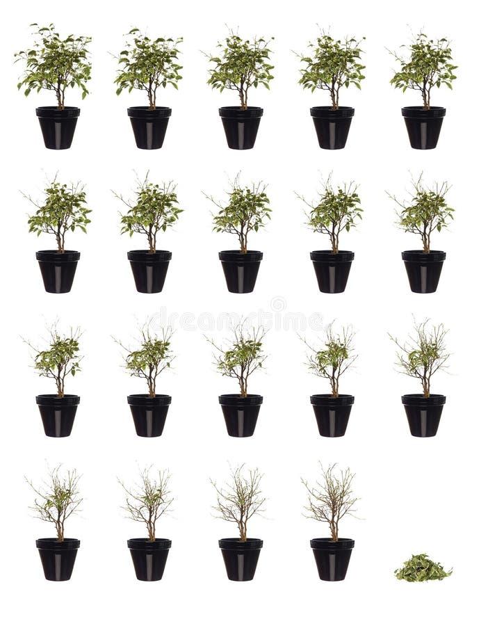 växt lagd in progress stock illustrationer