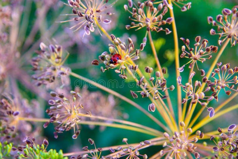 Växt med en liten röd nyckelpiga royaltyfri foto