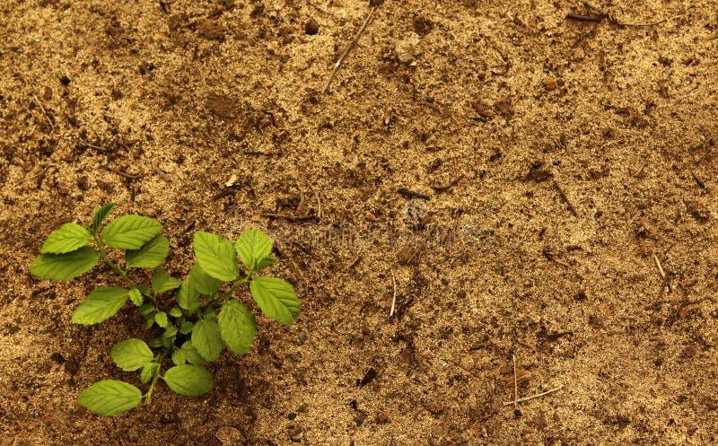 Växt med jord arkivfoto