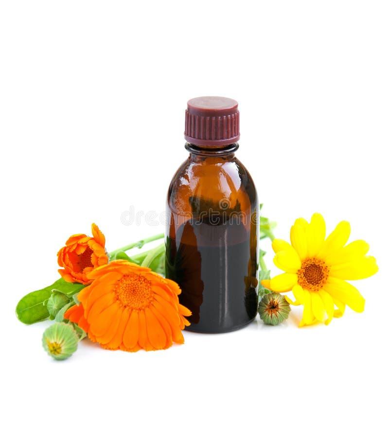 Växt- medicin arkivfoto