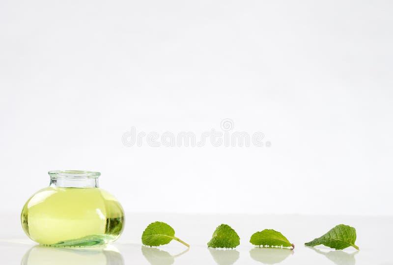 Växt- medicin med mintkaramellen royaltyfri fotografi