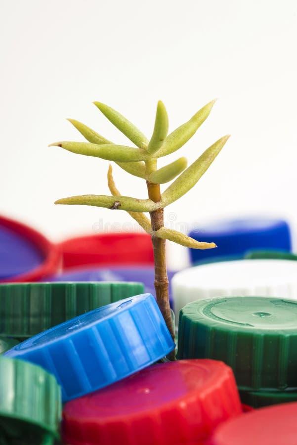 Växt mellan plast- proppar royaltyfri fotografi