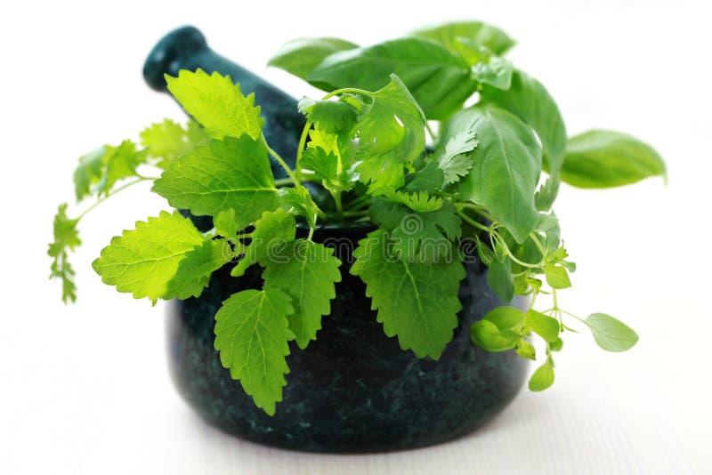 växt- mortelpestle fotografering för bildbyråer