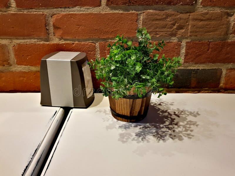 Växt och servetter på tabellen i kafét fotografering för bildbyråer